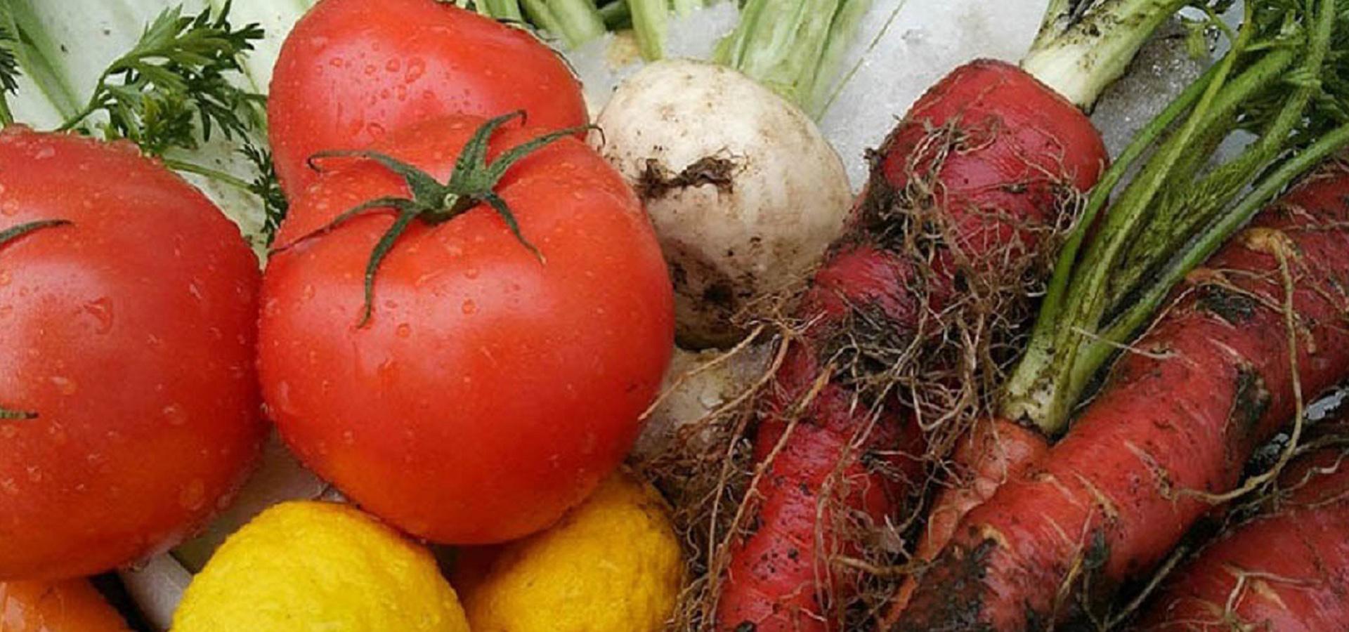 なにわ伝統野菜と大阪産野菜